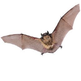 Sellos      de la categoría Murciélagos  '