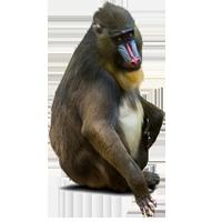 Sellos      de la categoría Monos  '