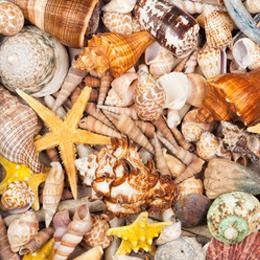 Sellos      de la categoría Conchas Y Corales  '