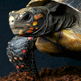 Sellos      de la categoría Tortugas  '