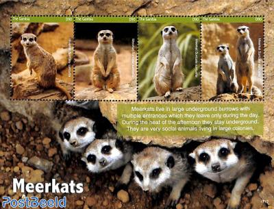 Meerkats 4v m/s