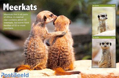 Meerkats 2v m/s