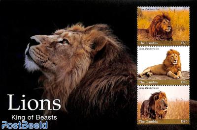 Lions 3v m/s