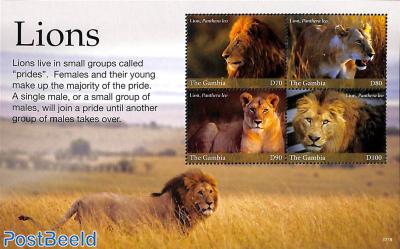 Lions 4v m/s