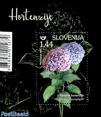 Hortensia s/s