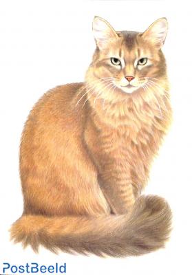 Francien van Westering, cat