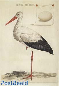 Nederlansche Vogelen