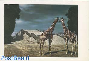 'Twee giraffen in het park van Versailles'